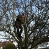 -3.5c and we were still up for pruning our West Ealing Orchard